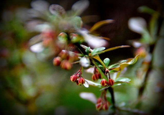 w moim ogrodzie Picasa #209908