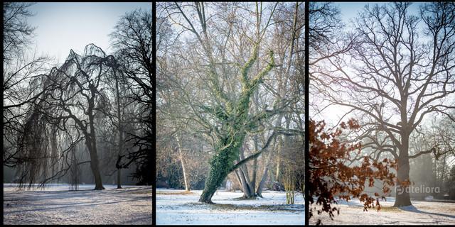Park Szczytnicki zimą. Piotr Schmidt #305419