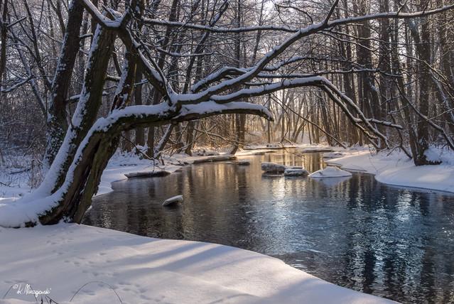Czarn Hańcza w zimowej szacie. pstrykacz #314683