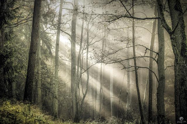 Tajemnicze smugi światła słonecznego w lesie Krzysztof Tollas