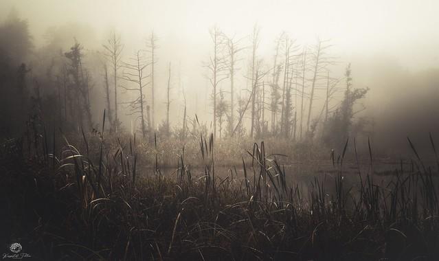 Tajemnicze leśne bagno z magią Krzysztof Tollas #326857