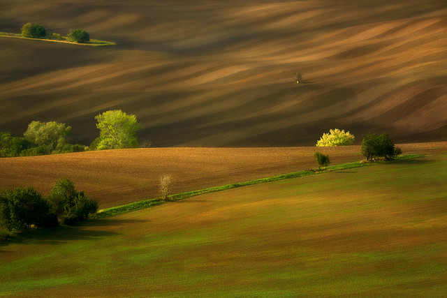 Morawskie pola Morawy, Czechy JAN SIEMINSKI #322297