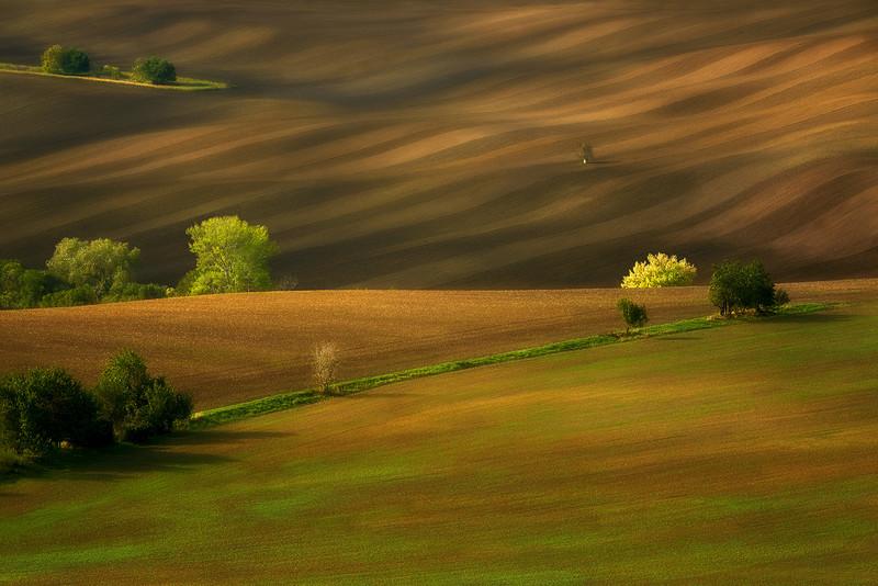 JAN SIEMINSKI                       |Morawskie pola