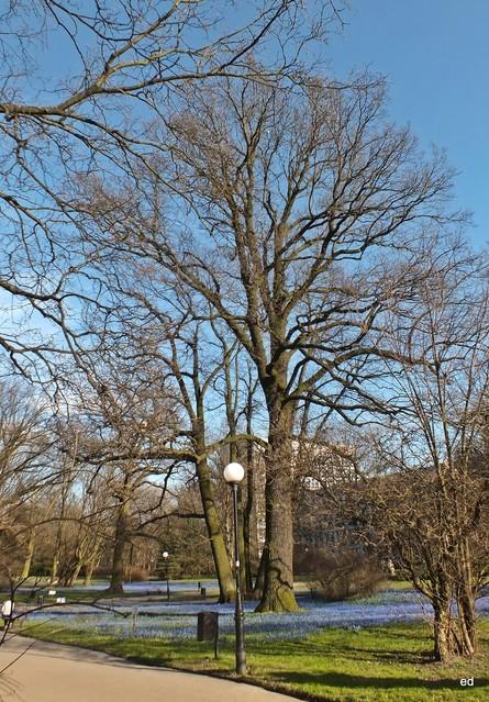 Cebulice w parku Klepacza w Łodzi Picasa #305395