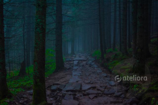 Mariusz Kusy road to hell