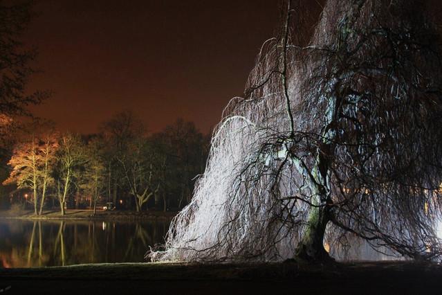 Picasa zimowy wieczór światła w Łazienkach III