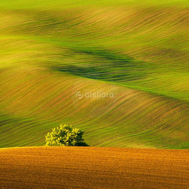GrzegorzM ...w polu...