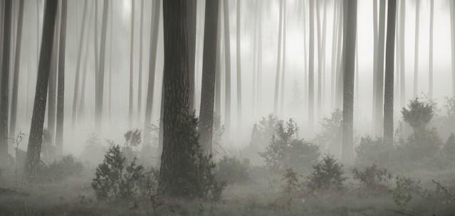 Sleepy Forest Krzysztof Tollas #324736