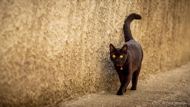 Castelvecchio's cat Piotr Schmidt #321066