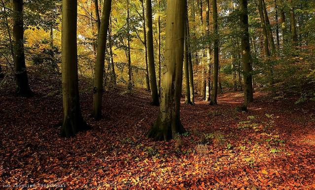 Kolory jesieni Zbyszek1955 #337906