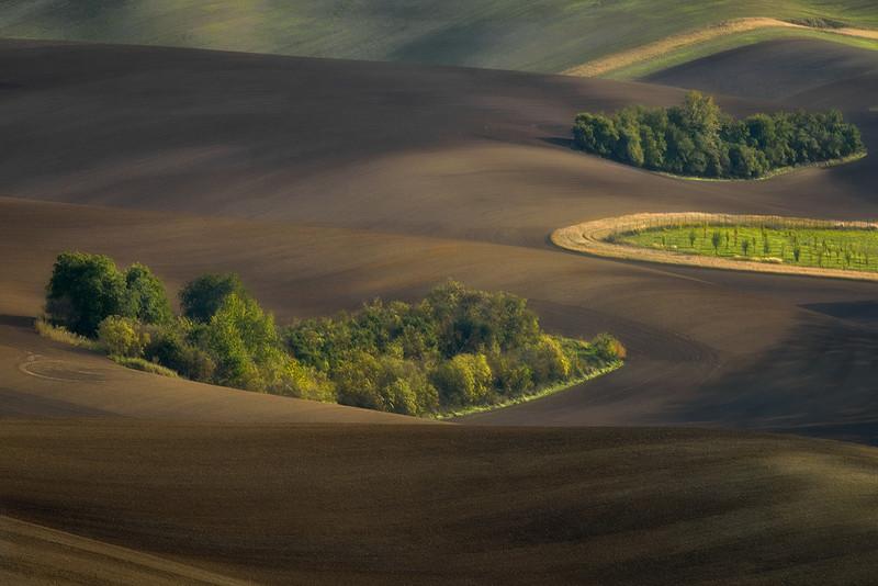 JAN SIEMINSKI|Morawy