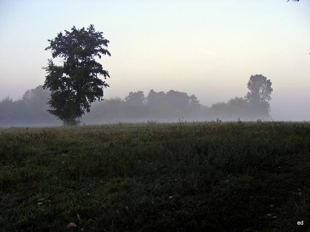 2009r mgła nad rzeką Picasa #309251