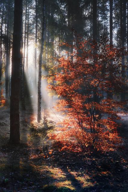 W jesiennym lesie #1 *** Sławek Rezerwa #311565