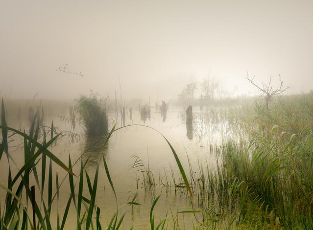 Mgła nad bagnami Krzysztof Tollas #330701