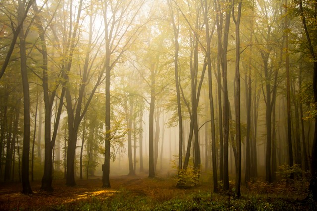 W moim magicznym lesie... Marcin STIEBAL #323522