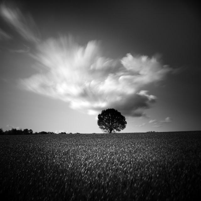 Photographer:Demaret Didier #205836