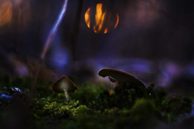 W zaczarowanym lesie macrofun #315075