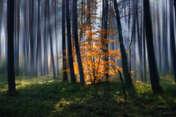 Sławek Rezerwa W jesiennym lesie #4