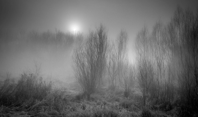 Foggy morning Krzysztof Tollas #324737