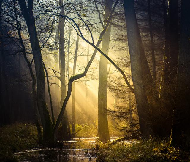 Krzysztof Tollas Wejdź do lasu