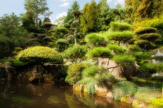 Japoński ogród, Jarków Zbigniew Kapusta #328176