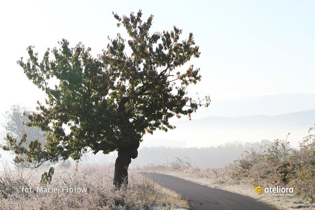 Mgła o poranku Jesienny Otwarty Plener Fotograficzny IZERY 2011