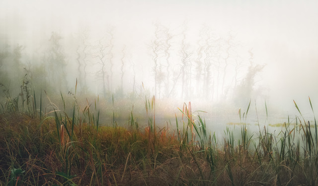 Mysterious forest swamp Krzysztof Tollas #331211