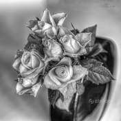 innypunktwidzenia różyczki