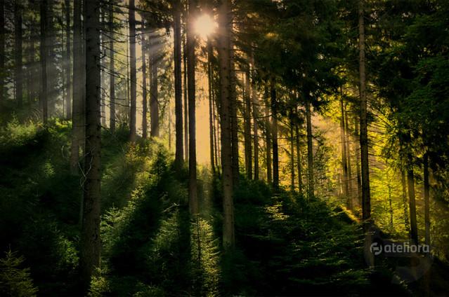 Lasy pod Zieleńcem Zbigniew Kapusta #321108