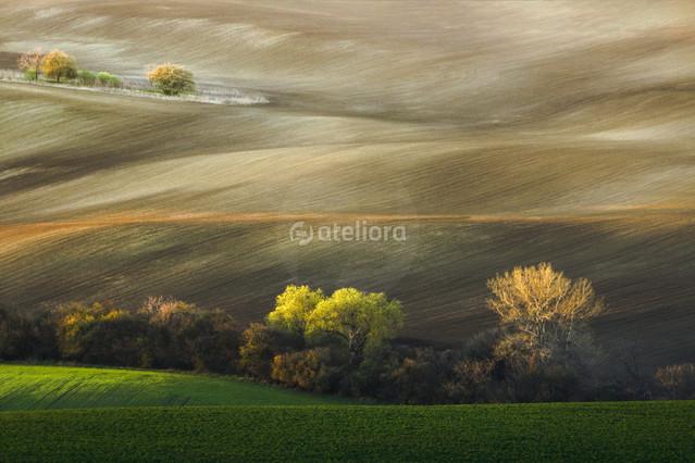 MORON Morawskie pola...
