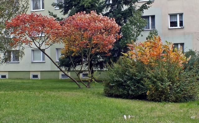 Jesień na osiedlu Picasa #310847