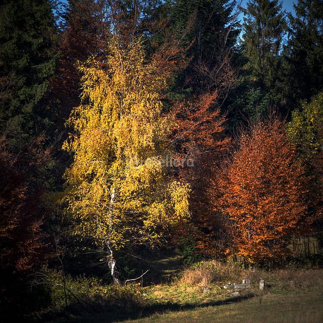 GrzegorzM ...jesienne kolory...cd
