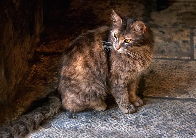 Lubię koty.... Zbigniew Stanislawski #121865