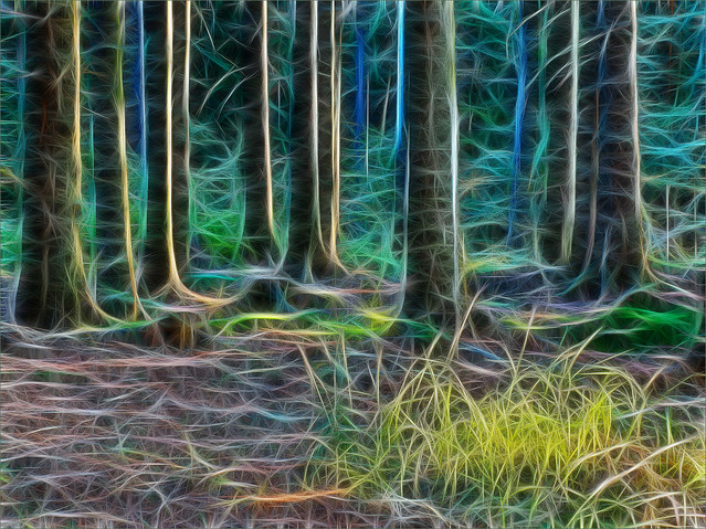 100-milowy las broonzy #330744