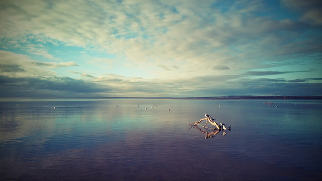 Lough Neagh - N.Ireland atenytom #334524