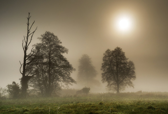 Trees in the fog Krzysztof Tollas #328166