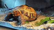 Picasa Mój  żółw