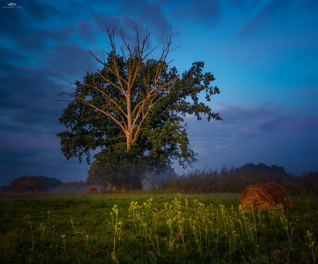 Dawn in the field Krzysztof Tollas #331476