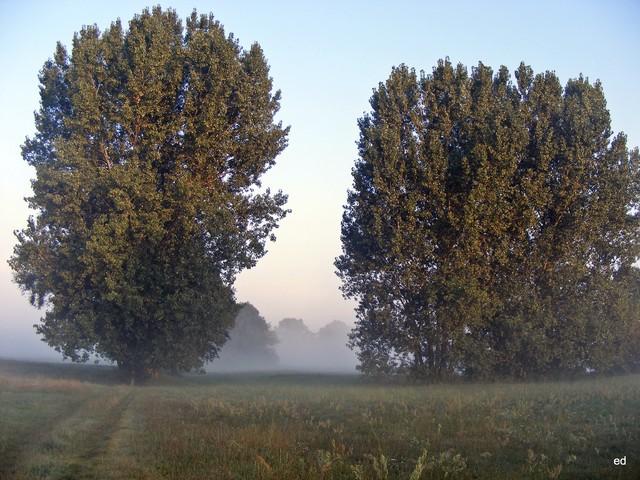 Mgła się cofa Picasa #307131