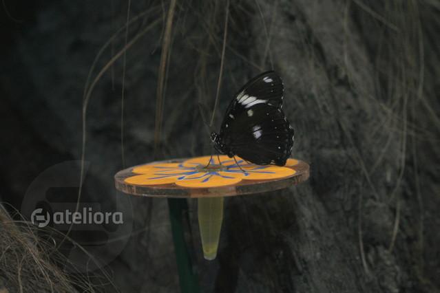 Karmik dla motyli iwonek #131971