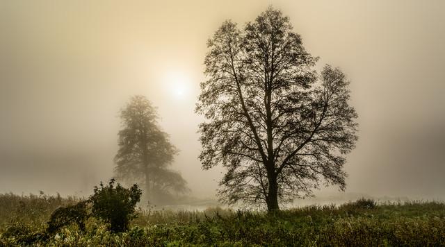 Foggy dawn Krzysztof Tollas #327789
