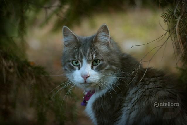 portret Rozbójnika Rumcajsa w lesie poczyniony... ;) Anka