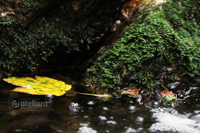 Jesienny liść Maciej Frolow #118076