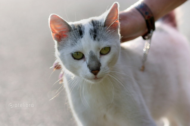 zaprzyjaźnijmy się... kotek przydrożny... Anka Bujniewicz