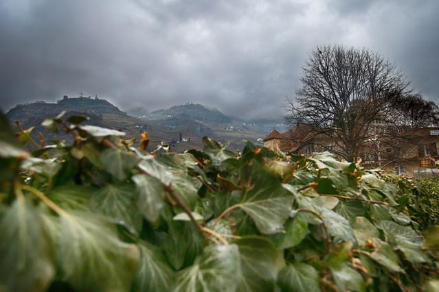 Bolzano, Włochy Winnice miejskie ROleksandra #325499