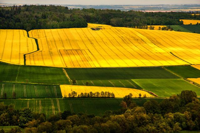 Żółta wiosna Aneta Konik #306677