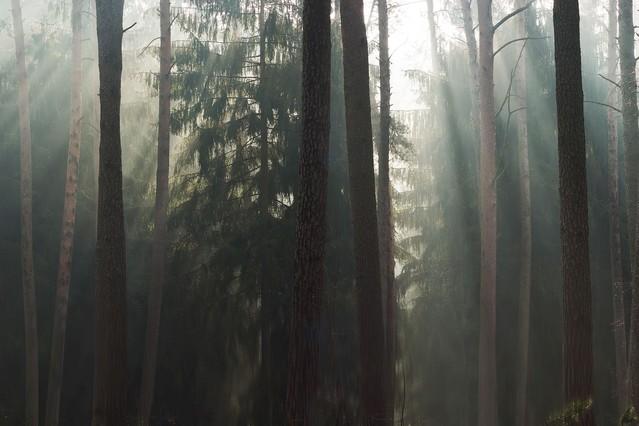 Światło lasu Krzysztof Tollas #317091