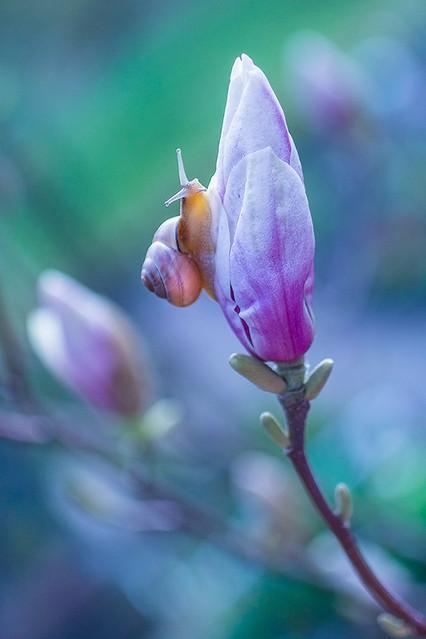 Jerzy Kowalski pora na magnolie