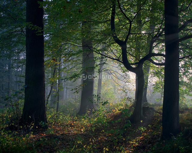 GrzegorzM ...tajemniczy las...
