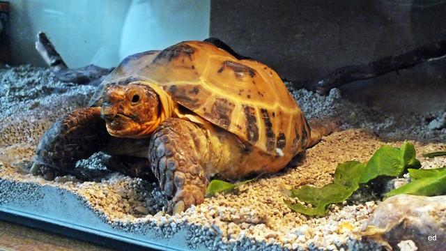 Mój żółw Picasa #314620
